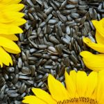 seed cycling balancing hormones naturally